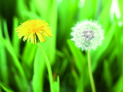 Blomsterbilde