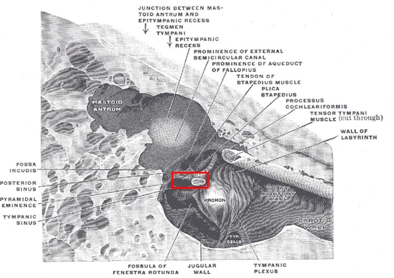 Musculusstapedius